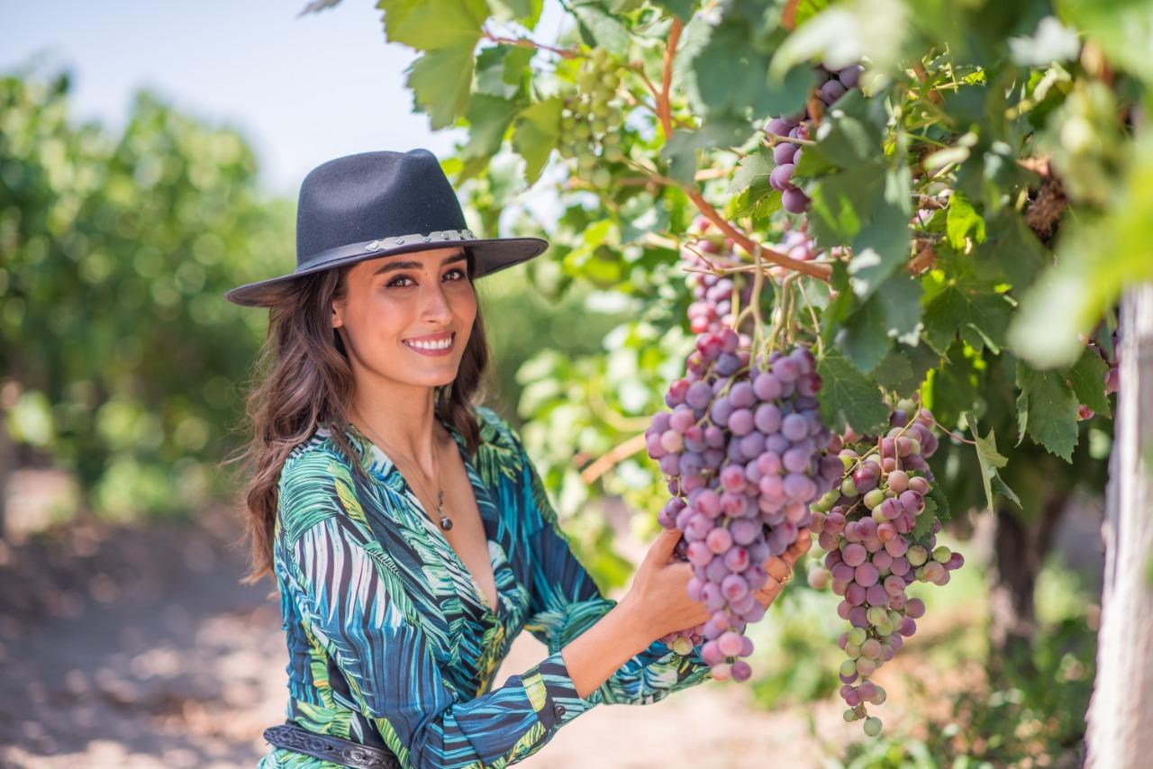 Hay una importante variedad de viñedos en Aguascalientes.